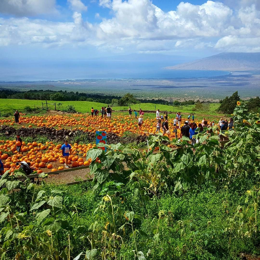 Coolest Pumpkin Patch Is On An Island Best Weather Maui Hawaii Aloha Alohastate 808state Photography Landscapephotography
