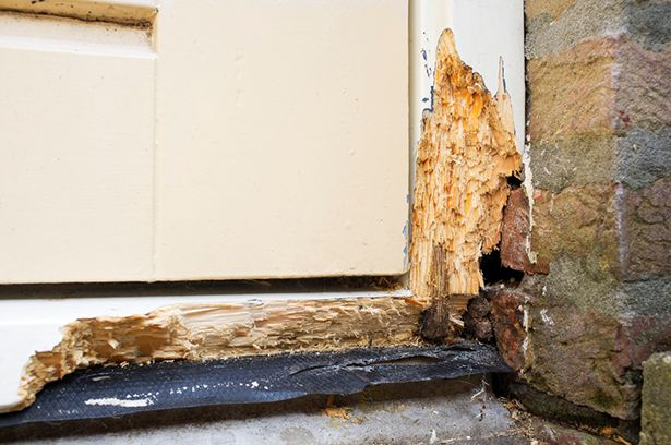 How Much Does It Cost To Repair Dry Rot With Images Repair