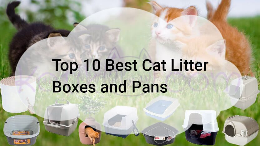 Best Cat Litter Box For Multiple Cats Automatic Cat Litter Box