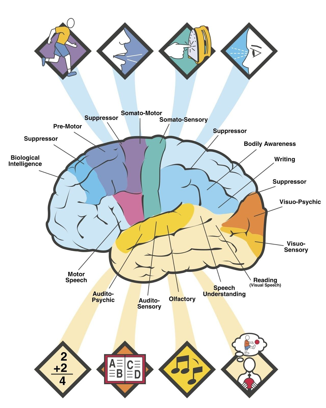 Brain Diagram Labeled with Functions | Brain Functions Diagram2 ...