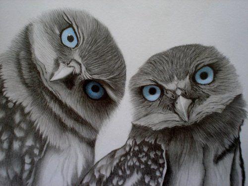 Blue Eyed Owls