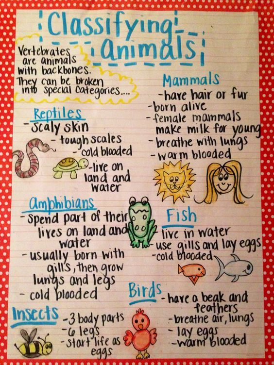 Image result for animal classification anchor chart