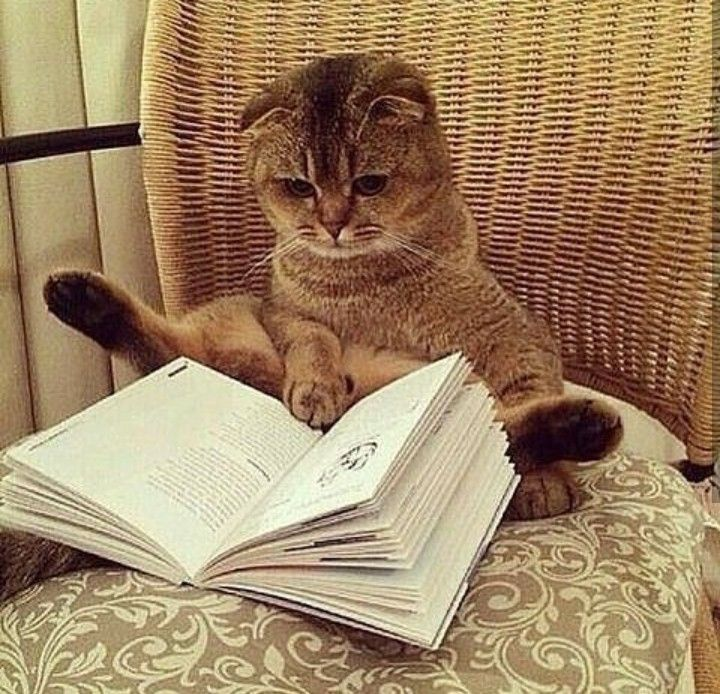 books cats reading Tap the link for an awesome