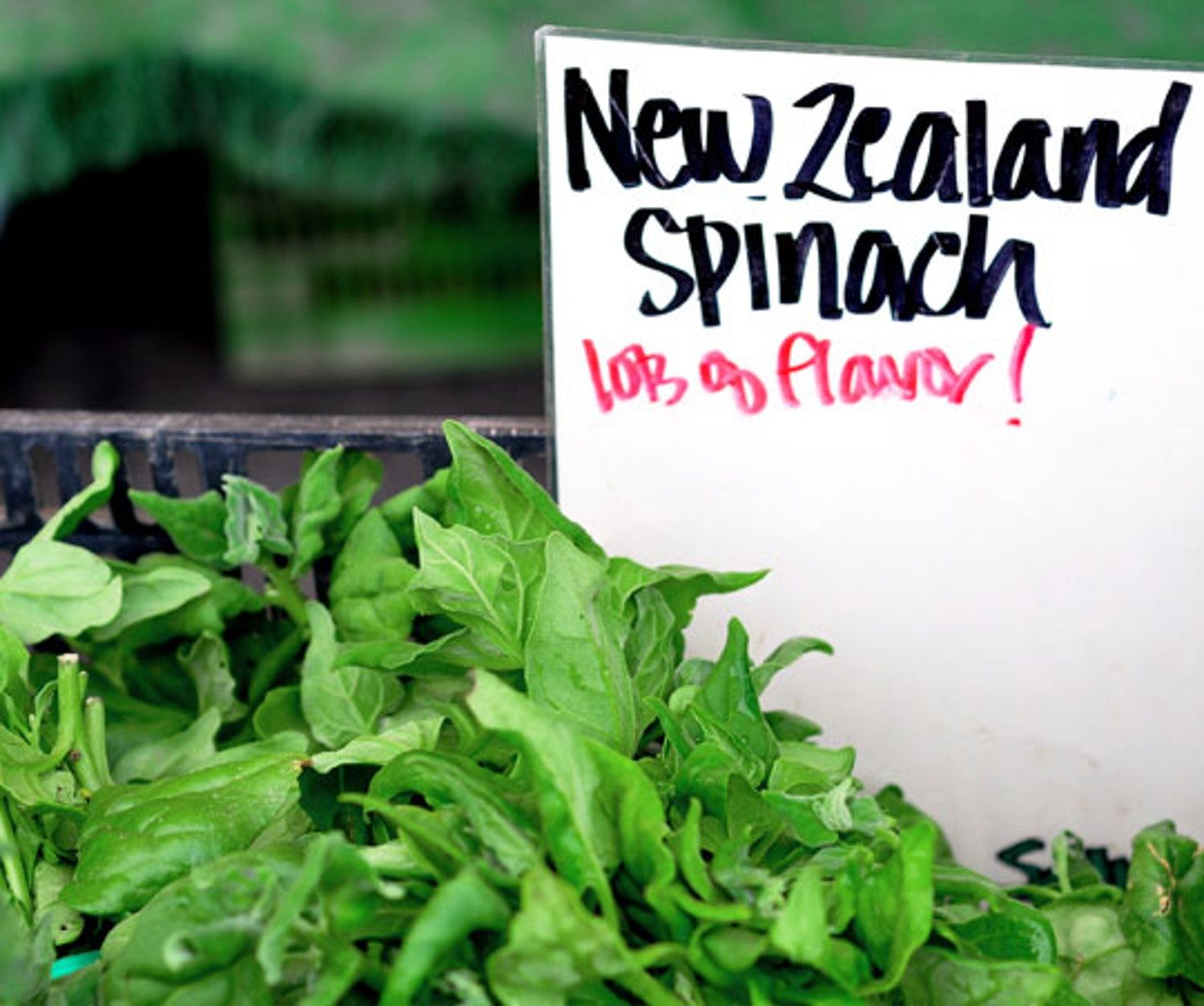 Farmers' Market Find New Zealand Spinach New zealand