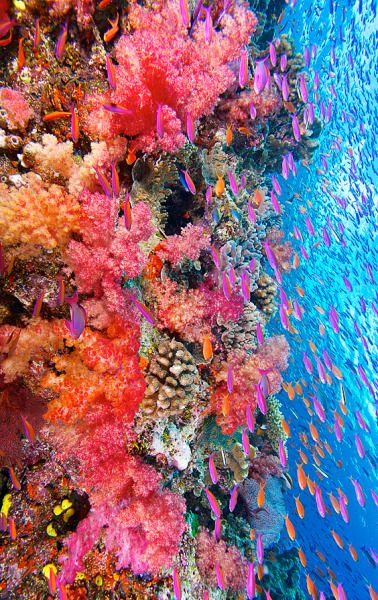 Coral Reef Tumblr Coral Reef Photography Coral Reef