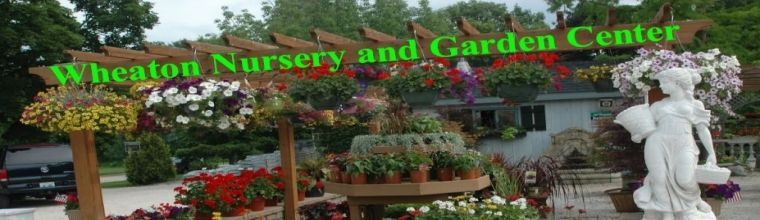 Garden Center Is In Full Bloom Come Check It Out Garden Plant