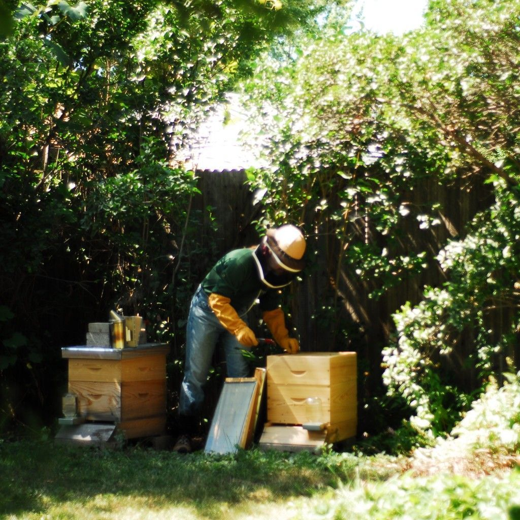The Best Hive For The Backyard Beekeeper | Backyard Ecosystem  #backyardbeekeeper