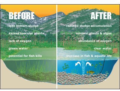 Aeration is very important for a healthy pond. is very important for a healthy pond.