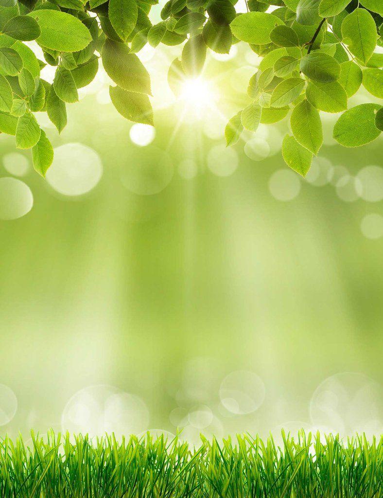 Spring Green Grass Sunshine Bokeh Photography Backdrops Green Nature Sunshine Photography Green Backgrounds
