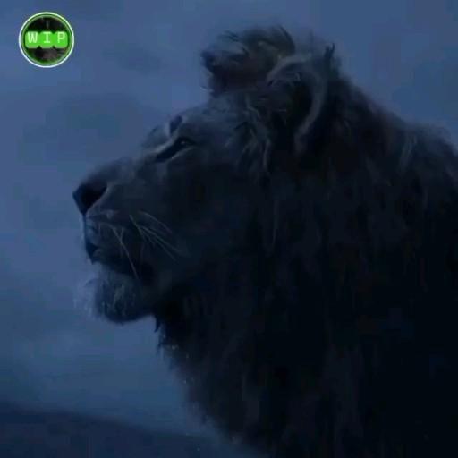 BE LIKE A LION