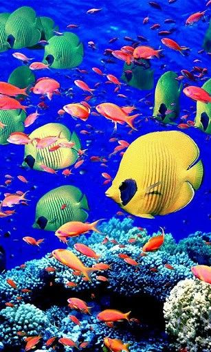 Coral Reef Background Iphone 5 Coral reefs hd live wallpaper Aquarium Live Wallpaper, 3d Wallpaper