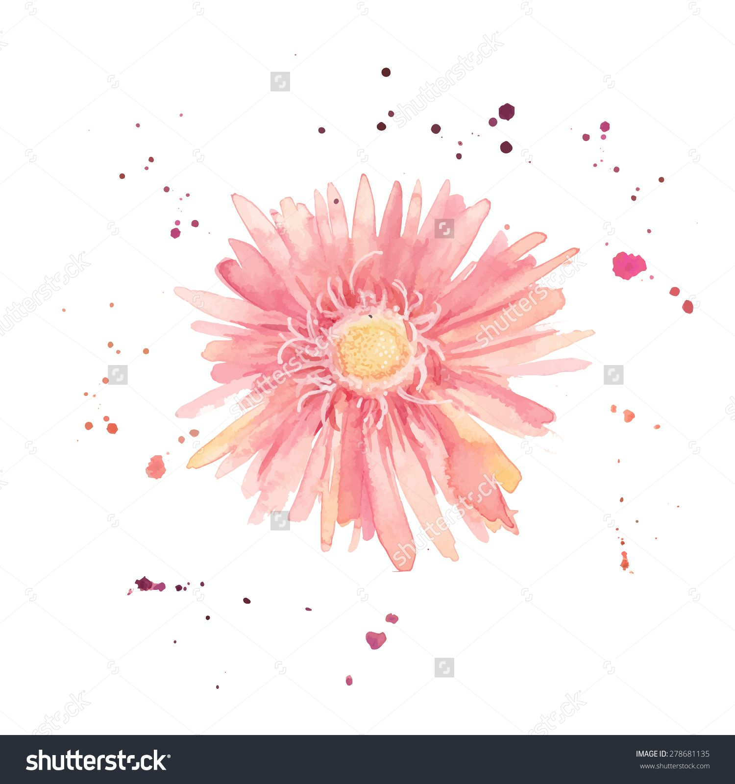 Watercolor Gerbera Single Flower With Paint Drops And Dots Hand Drawn Vector Botany Illustration