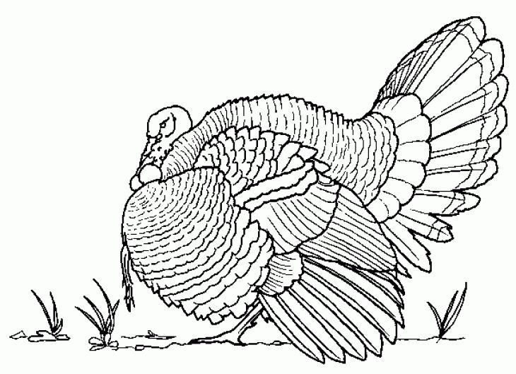 Free Realistic Coloring Page Of Turkey Bird For Adults