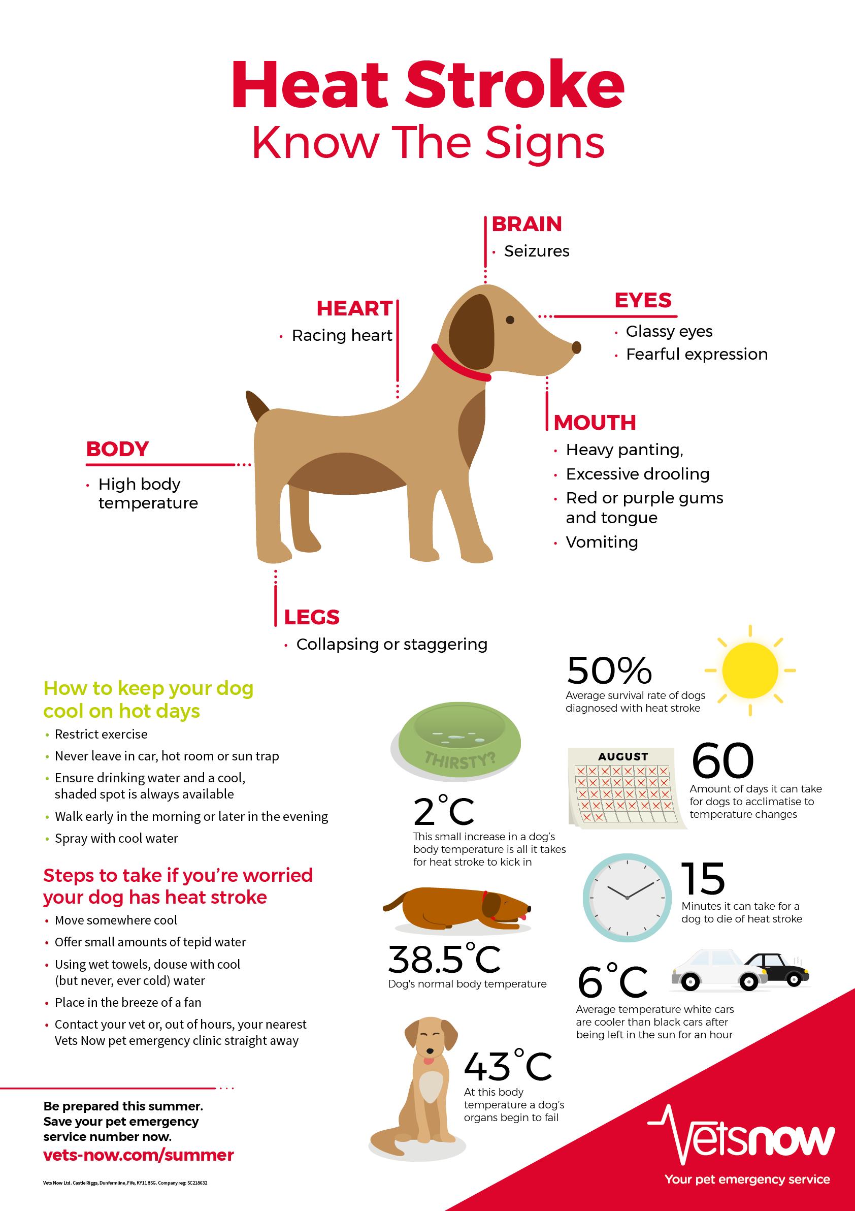 Symptoms Of Heat Stroke In Dogs Infographic Vets Now Heat Stroke In Dogs Dog Infographic Dog In Heat