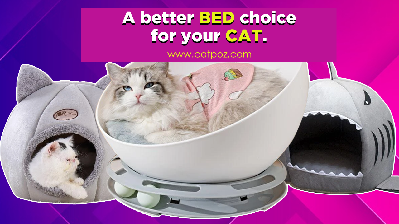 Best Bed Choice For Cat In 2020 Cat Bed Cool Cats Cats