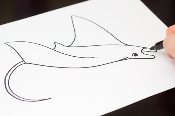 Simple Line Drawings Of Animals : How to draw a manta ray art for kids hub drawings