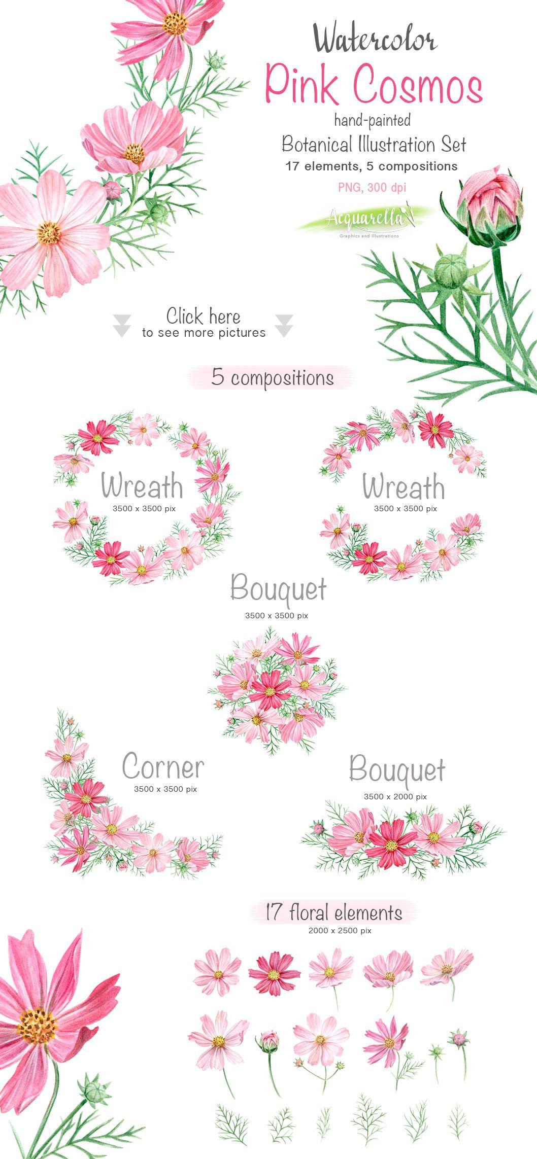 Watercolor Set Pink Cosmos Flowers 수채화 꽃 꽃 수채화