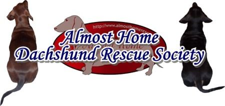 Pacific NW Dachshund Rescue...please check them out...you