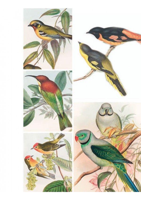 Le grand livre des oiseaux editions de saxe editions de - Edition de saxe ...
