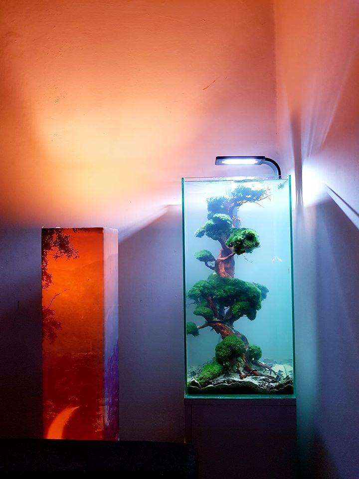 aquascape, hardscape, | Aquascaping, Akwarium, Ryby akwariowe