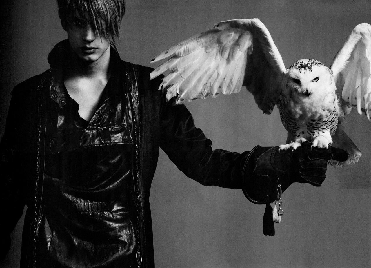 Snowy Owl (с изображениями) | Фотографии, Боевая раскраска ...