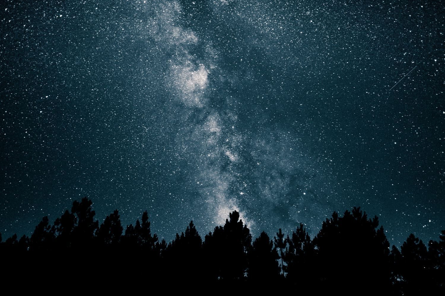 The Six Free Natural Healers Night Sky Wallpaper Pine Tree Silhouette Star Pictures