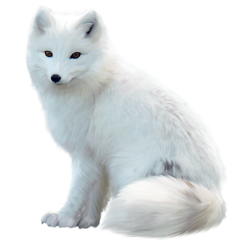 Arctic Fox Png Image With Transparent Background Arctic Fox Fox Fox Drawing Easy