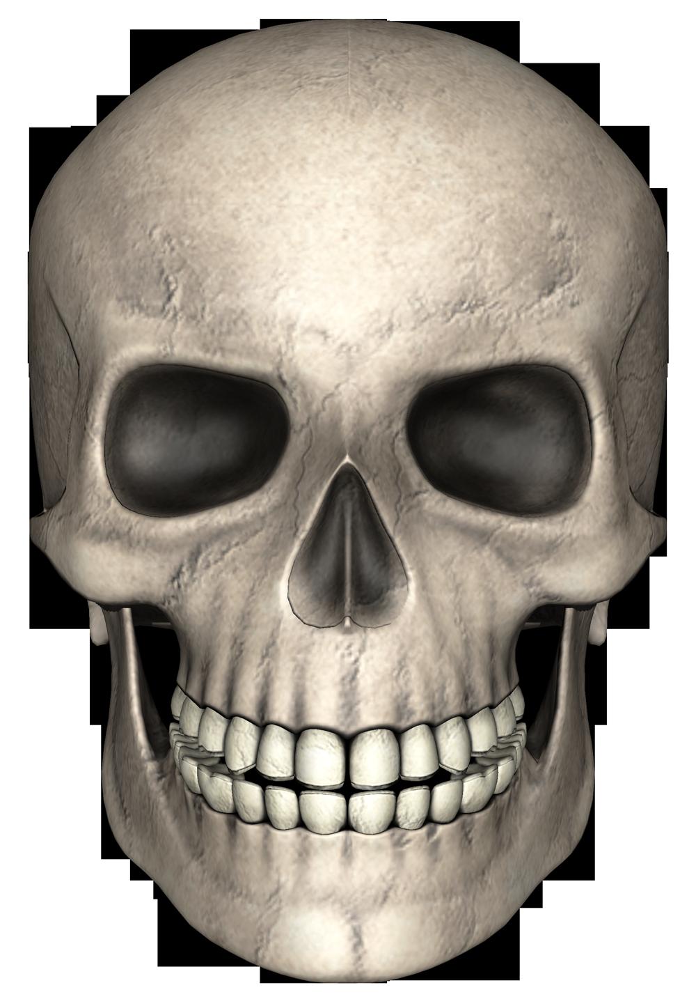 Skull Png Image Skull Real Skull Png