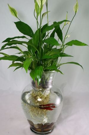 Beta fish plant quarium craft projects and diy for Plant with fish in vase