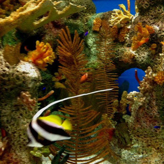 Salt water tanks of beautiful coral reefs & fish!