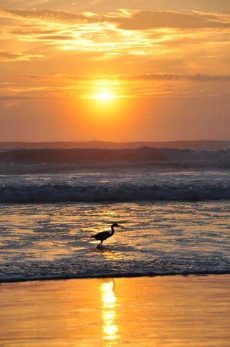Orange Beach Sunrise Bird Fishing Florida Watercolor Possibilities