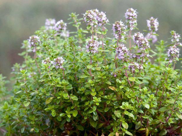 Hgtvgardens Has Moved Growing Herbs Indoors Easy Herbs 400 x 300
