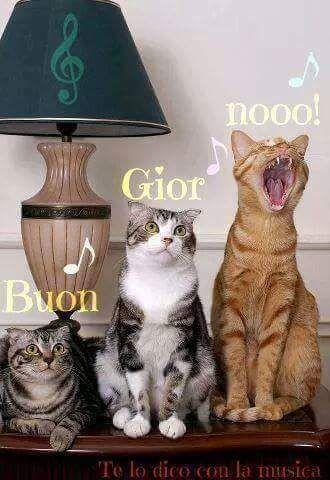 Cat Saturday 29 Photos σκόρπιες λέξεις Cats Funny Cats E