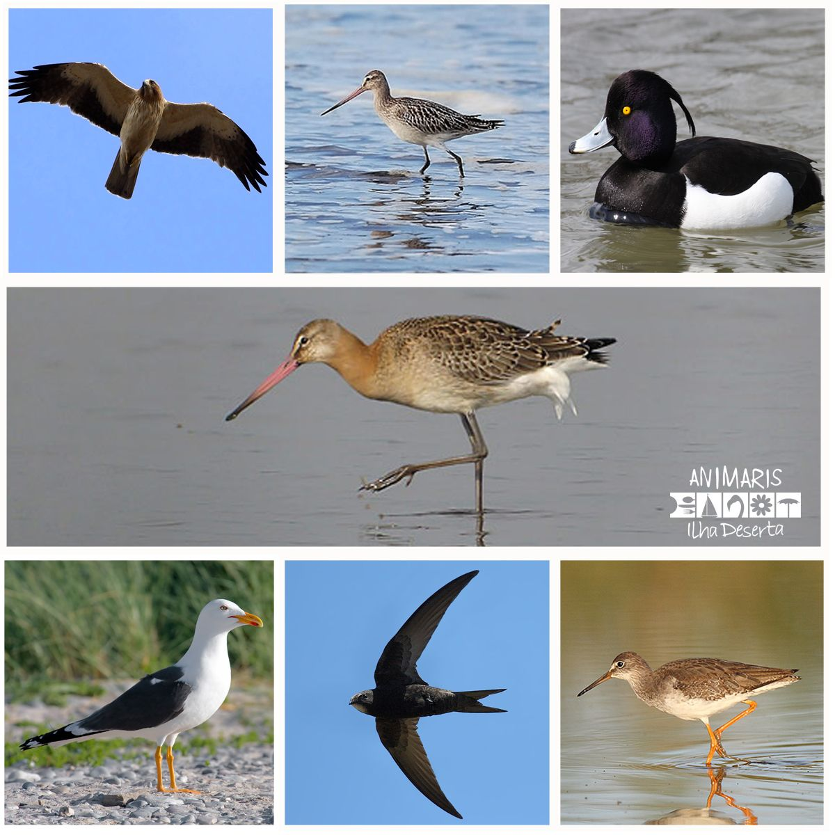 Ao desfrutar dos nossos Eco-Tours no #ParqueNaturalRiaFormosa, poderá encontrar mais de 84 espécies de aves.