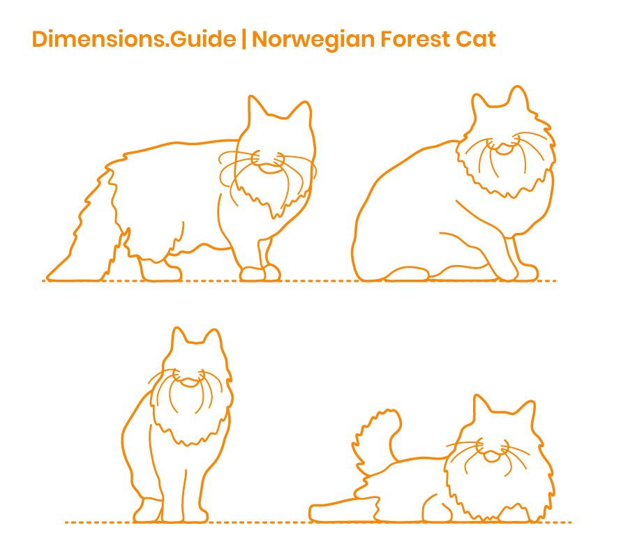 The Norwegian Forest Cat Also Known As The Skogcatt Is A Semi