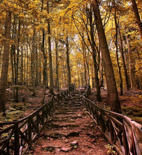 Into the Forest (by Łukasz Babula)