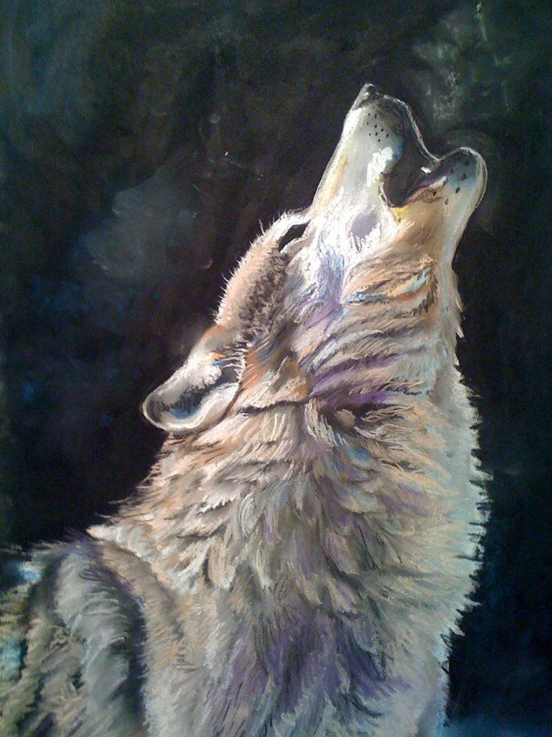 Wolf pastel painting by chibudgielvr | Art Pastel Painting