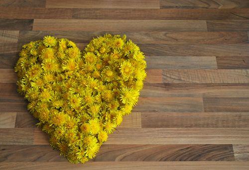 Ein Herz für den Löwenzahn - Unsere Löwenzahnblütenernte.