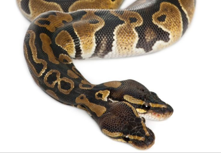 7 Weird Facts About Snakes Snake Facts Snake Pet Snake