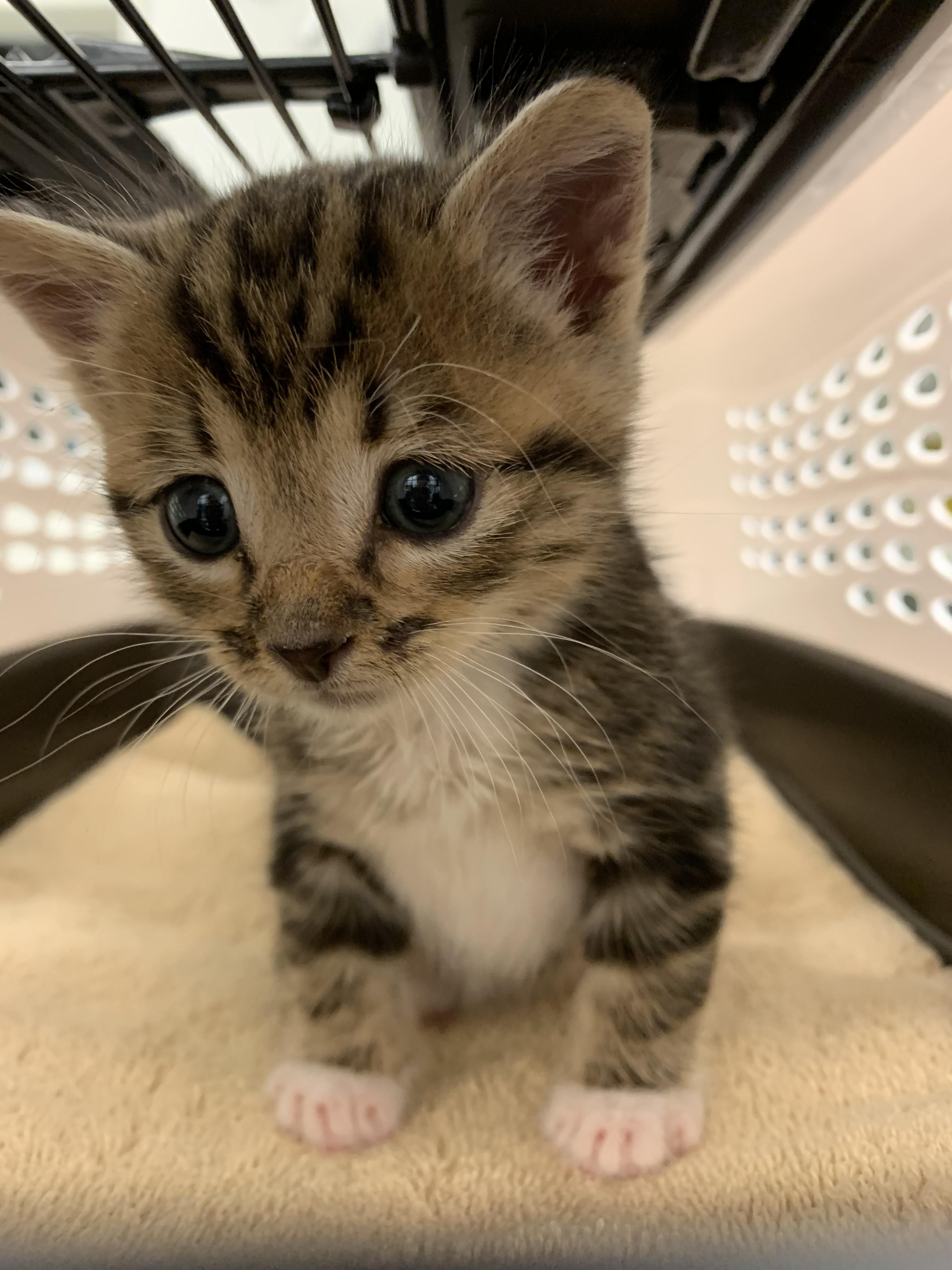 This Little Angel Was Found Outside In The Backyard She Now Has A Forever Home Https Ift Tt 2mixfx4 Cute Animal Photos Kitten Care Newborn Kittens