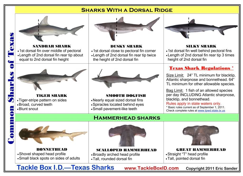 Shark fishing texas saltwater fishing pinterest for Shark fishing texas