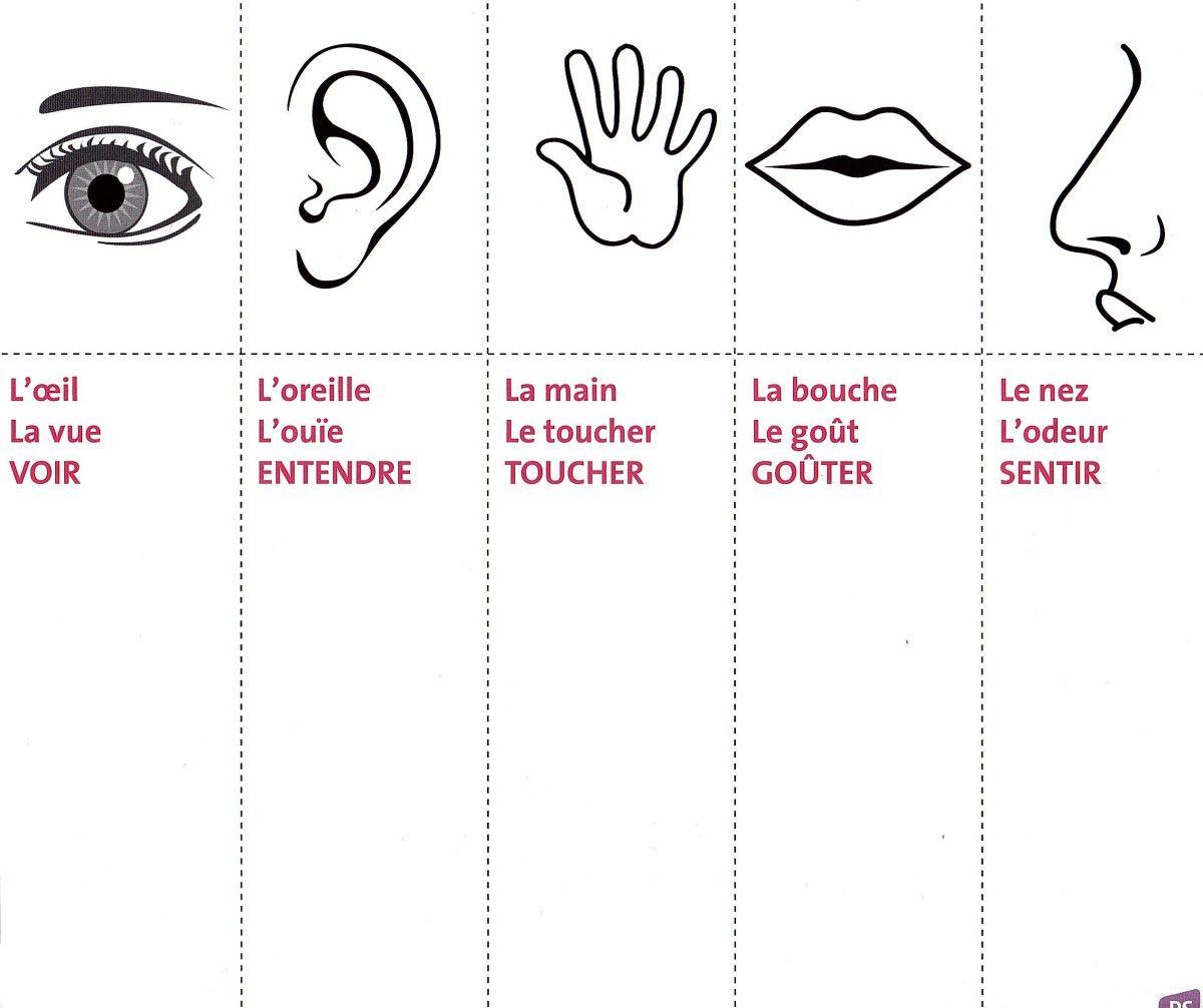 Differentes Propositions D Activitees Sur Les 5 Sens 5 Sens