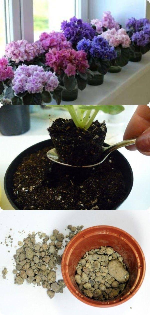 Фиалки – правильный уход в домашних условиях   Цветы в ...