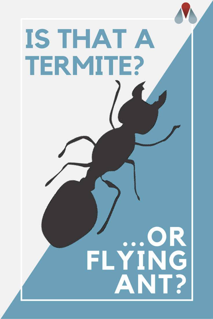 To avoid making the critical mistake of misidentifying a termite as ...