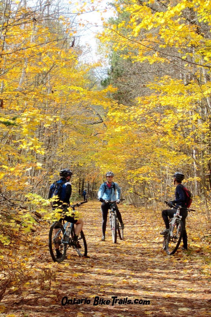 Copeland Forest Mtb Trail Mtb Trails Trail Forest