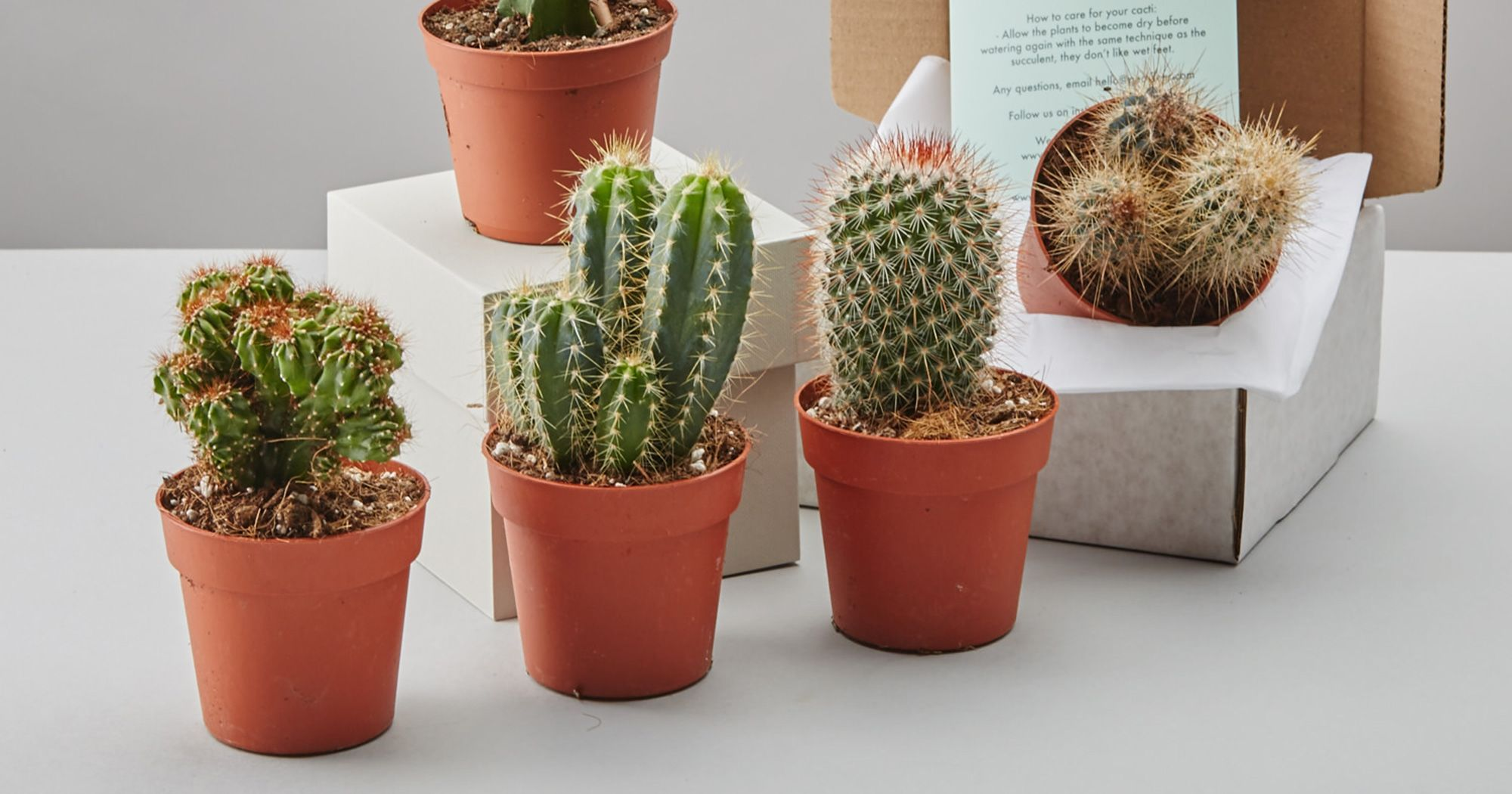 These Are Our Favorite S To Order Cute Houseplants Online