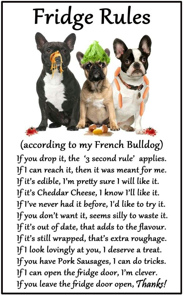 Frenchie S Fridge Rules French Bulldog Funny French Bulldog Art French Bulldog