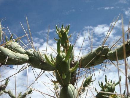 Adaptation of desert plants | Animal and Plant Adaptations ...