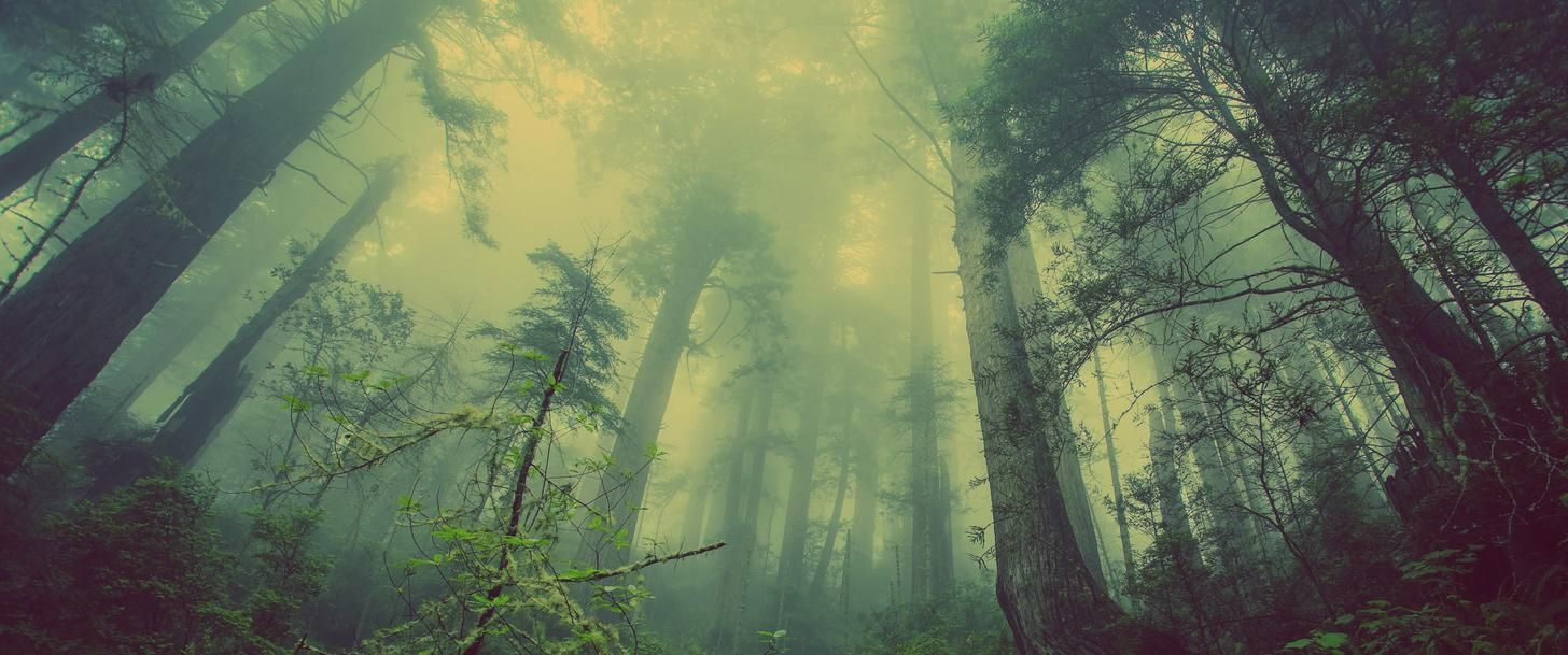 3440x1440 Wallpaper Dump Misty Forest Forest Wallpaper Beautiful Forest