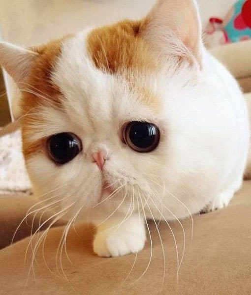 Adorable Cat Cute Face